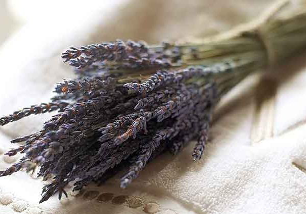 lavender-dried