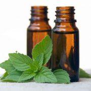 wild mint essential oil